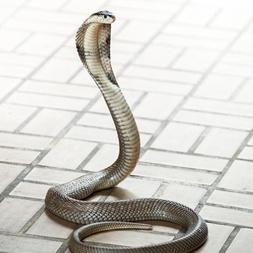 Jeu coquin : charmeuse de serpent